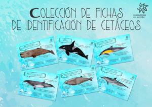 [Fichas] Identificación de cetáceos