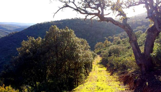 Cazadores prohíben usar una ruta senderista pública de Cabañeros