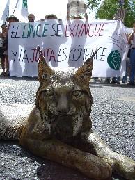 Urgen al Gobierno andaluz a establecer una nueva estrategia para evitar los atropellos de lince