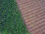 [Ciberacción] Paremos los agrocombustibles que agravan la deforestación