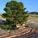 El borrador del Decreto por el que se regulan las autorizaciones de cambio de uso forestal, pone en riesgo los suelos forestales