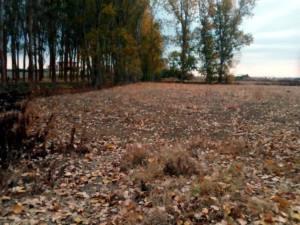 No avalamos la planta de Biomasa de Guardo