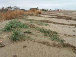Torreblanca daña las dunas de la playa de Torrenostra