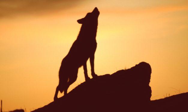Celebrarán los 100 años de Picos de Europa con un plan para matar más lobos