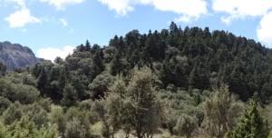 Solicitan la expropiación de un pinsapar en el Parque Natural Sierra de Grazalema