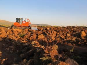 El monte de Sigueruelo conservará su vegetación natural