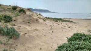 [Ciberacción] Por un Plan Integral de Recuperación de la Bahía de Algeciras