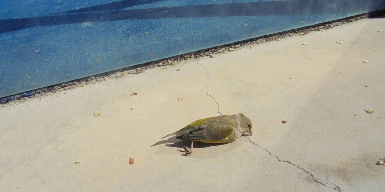 Cristaleras de pádel, trampa mortal para las aves