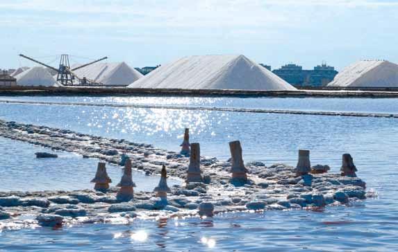 Alegaciones a la licencia ambiental de la compañía arrendataria de Las Salinas de Torrevieja