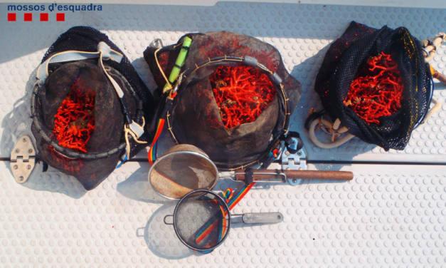 En defensa del corall vermell, una joia de la Mediterrània a preservar