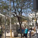 El Equipo de gobierno, continúa aniquilando el patrimonio ambiental urbano