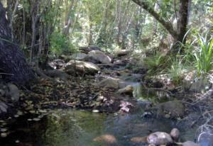 Reclaman la declaración urgente de las 24 reservas naturales fluviales en Andalucía