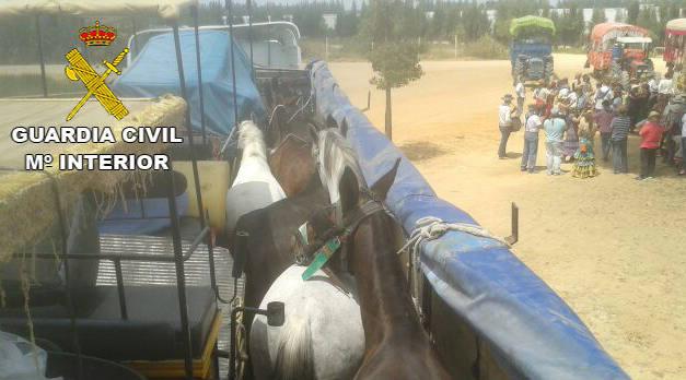 Una romería sin maltrato animal en la que se cumpla la ley