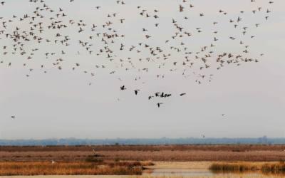 20 años de Ecologistas en Acción en la defensa de Doñana