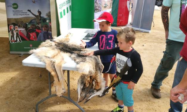 Critiquem l´injustificable exhibició d´una pell de llop en un fira de caça a Girona