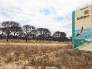 Piden cautela en el plan de restauración del incendio forestal de Doñana