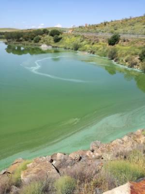 Piden información sobre la aparición de algas en el Embalse de Los Molinos