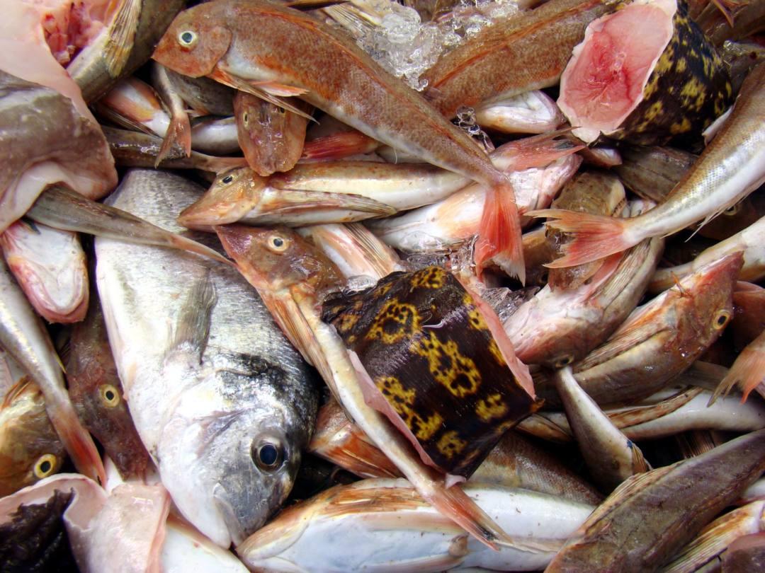 Hacen un llamamiento para acabar con la grave situación de sobrepesca en el Mediterráneo