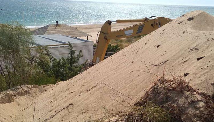 Una actuación municipal, destruye flora autóctona y zonas de reproducción del camaleón