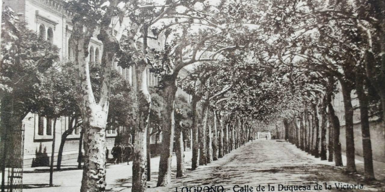 [Ciberacción] Por un cambio en la política de gestión del arbolado en Logroño
