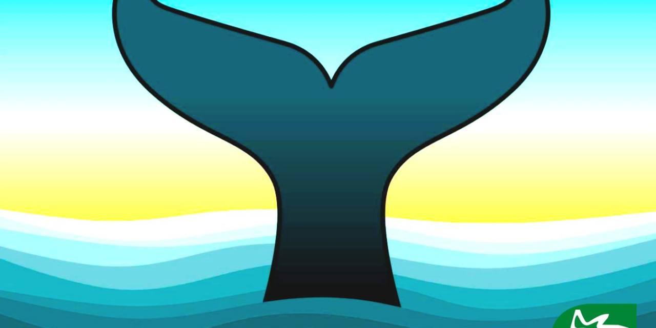 Manifiesto sobre la conservación de los cetáceos
