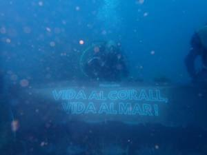 Nombroses entitats es tornen a unir per sol.licitar la protecció del corall vermell