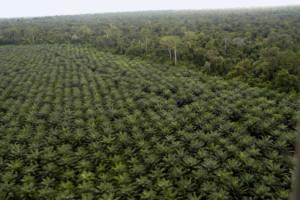 Coches y camiones obligados a quemar aceite de palma para cumplir con los objetivos europeos de renovables