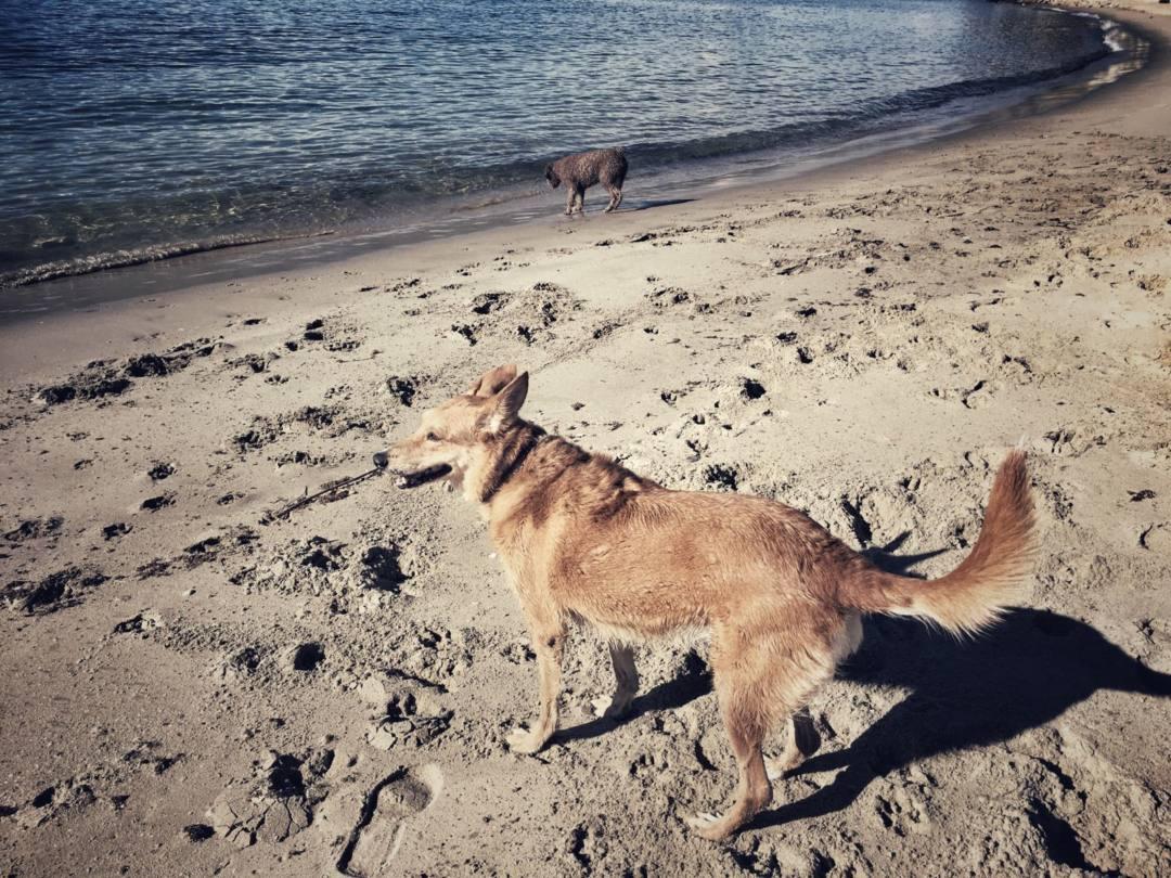 Apoyan la petición para que Algeciras cuente con playas para perros