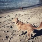 Apoyan la petición, para que Algeciras cuente con playas para perros