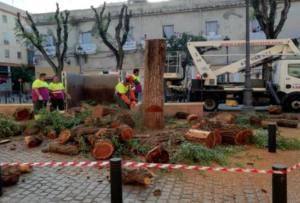 Exigen explicaciones al Ayuntamiento de Sevilla por la tala de árboles
