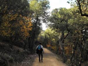 Necessitem un Pla Forestal Valencià