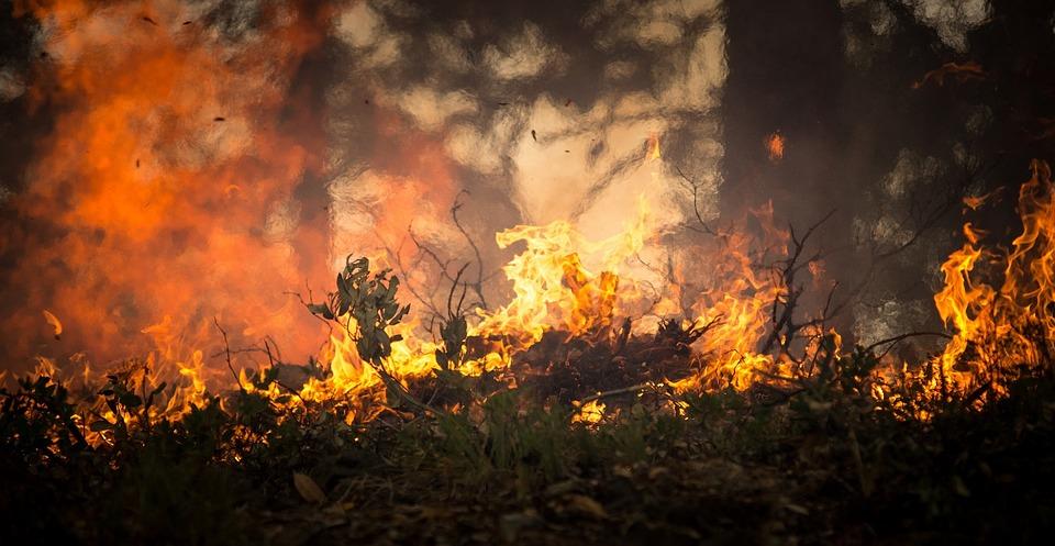 Educación ambiental e investigación para evitar incendios