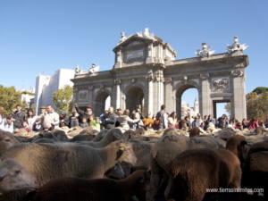 20 años de desidia en la gestión de las vías pecuarias de la Comunidad de Madrid