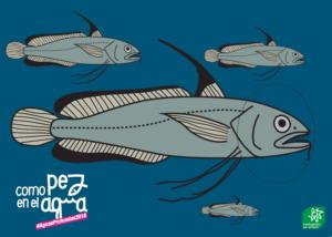 Campaña para evitar la sobrepesca en las aguas profundas