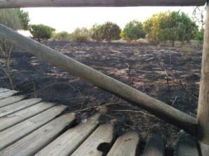 Se incendia una zona de alto valor faunístico, ante la negligencia del Ayuntamiento
