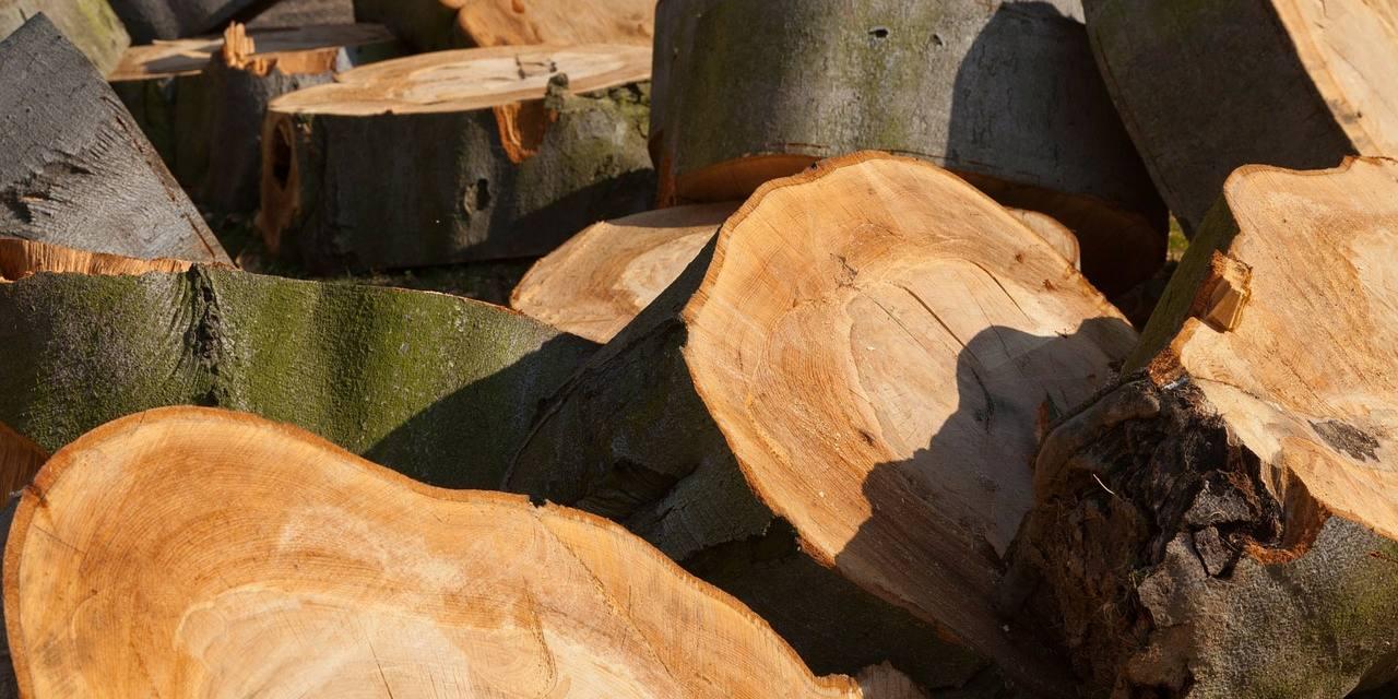 Presentadas alegaciones al proyecto de decreto de actuaciones forestales