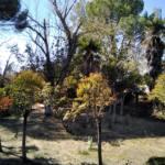 ADIF abandona su patrimonio natural en Aranjuez