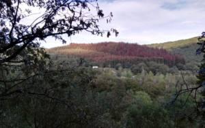 La fumigación de los pinares con óxido cuproso supondrá el exterminio de montes y ríos