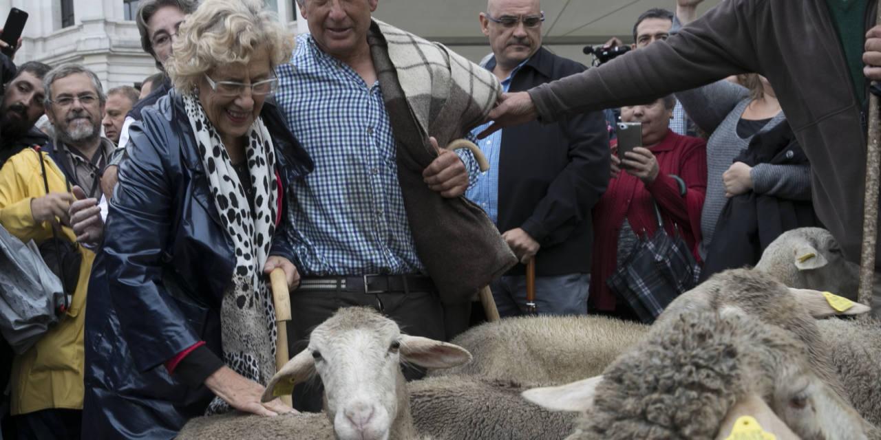 Carta abierta a Manuela Carmena, alcaldesa de la villa de Madrid