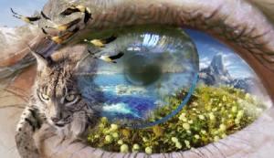 Quedan 800 días para detener la pérdida de biodiversidad