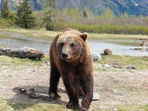 Critiquen al Govern de la Generalitat per proposar l'expulsió de l'ós Goliat