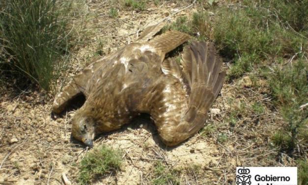 Comienza el juicio en Navarra por el mayor caso de envenenamiento de fauna registrado en España