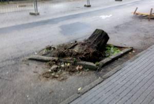 Tercer arboricidio en la ciudad de Cáceres