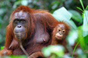 [Ciberacción] No queremos más aceite de palma en nuestros depósitos