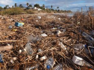Un litoral lleno de residuos