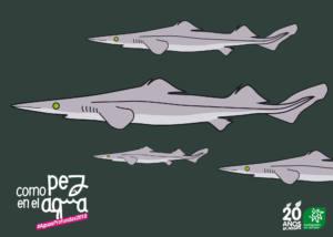 Solicitan la mejora de la gestión de los tiburones de profundidad en la UE