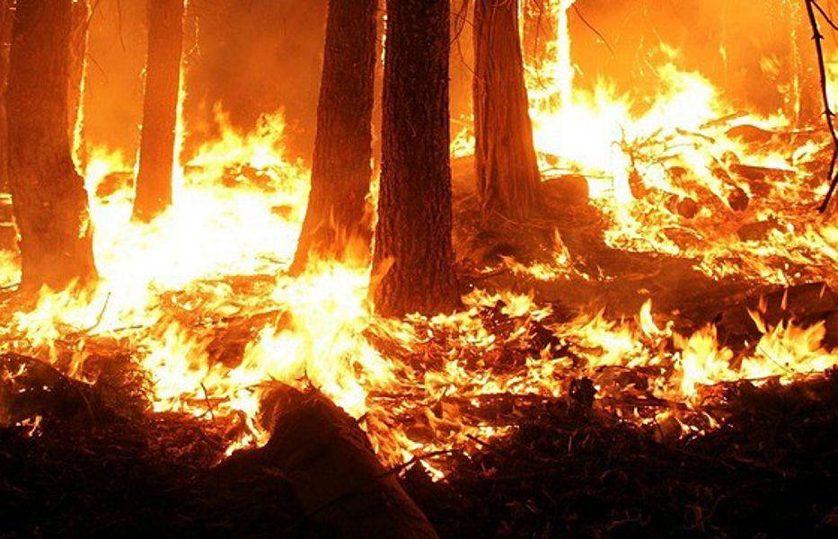 El uso del fuego como método de control de topillos esta prohibido