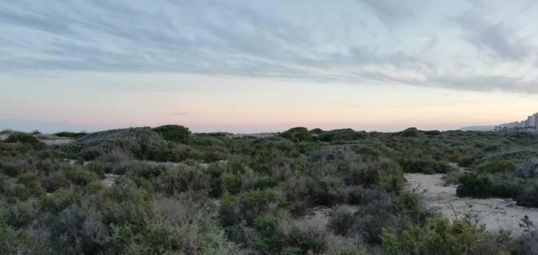 Al·legacions a la restauració de la platja del Saladar d'Aigua Amarga