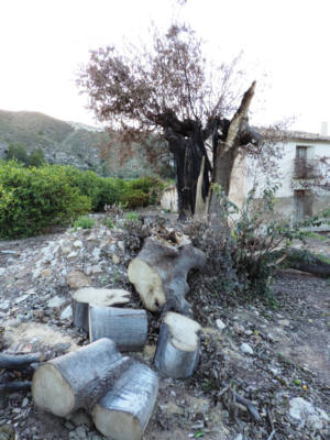 Denuncian graves daños al Almez de Blanca