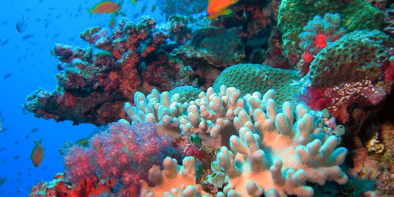 La crisis del arrecife de coral